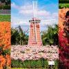 中社觀光花市 |台中親子景點,紅黃雞冠花毯秋冬限定,近期繽紛百合也開花了!