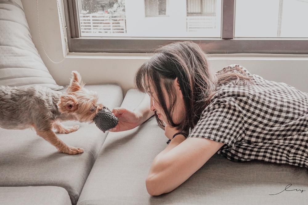 台灣首支專業級 寵物益生菌 快樂奇毛子 PET CALM,消除毛孩壓力!