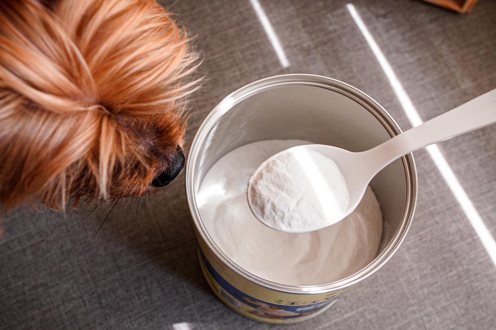 狗狗營養品推薦  汪汪寶貝營養品開箱,增骨力、增腸力、增亮麗3種黄金组合,增強狗狗腸胃保健!