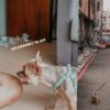 毛小愛寵物保姆平台 |全台最大專業的寵物保姆app,客製化1對1專業到府服務,不管是到府照顧,陪伴散步,到府洗澡美容,到府獸醫都有,在家就能照顧毛孩!