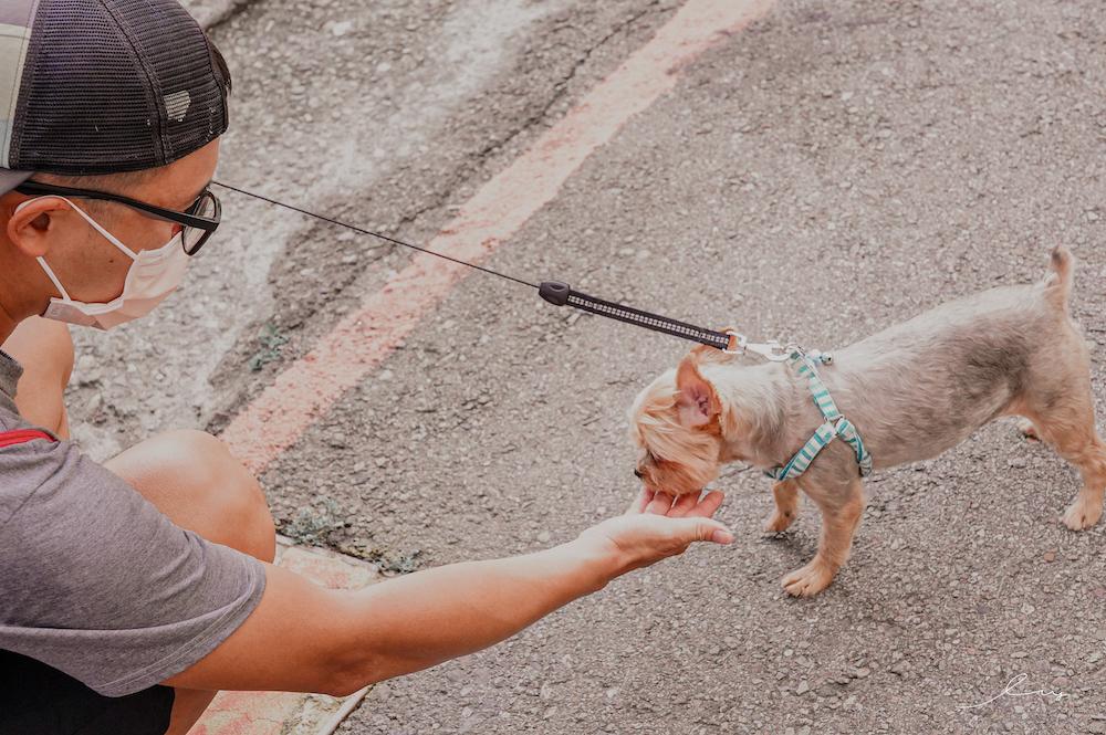 毛小愛寵物保姆平台  全台最大專業的寵物保姆app,客製化1對1專業到府服務,不管是到府照顧,陪伴散步,到府洗澡美容,到府獸醫都有,在家就能照顧毛孩!