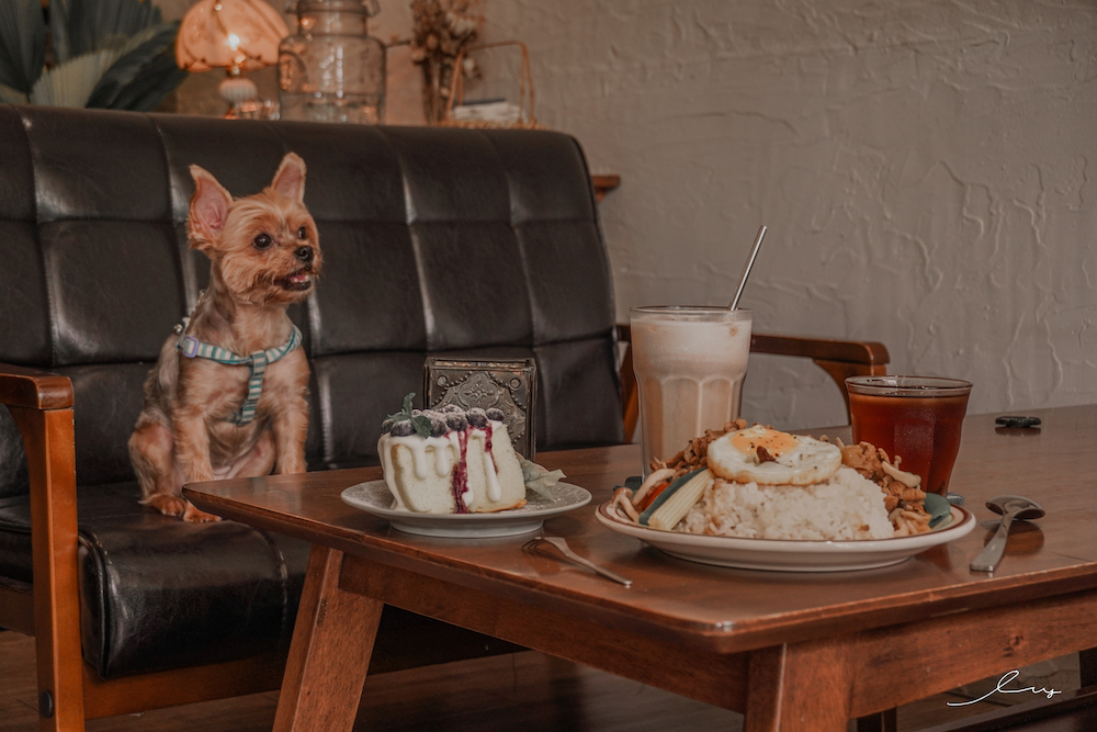 嶌Z咖啡  宜蘭寵物友善餐廳,超chill老宅咖啡廳,必吃CP值高的馬鈴薯燉肉飯!
